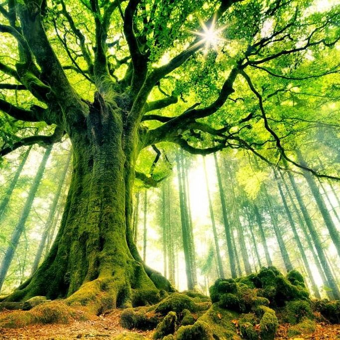 Green hardwood tree in forest